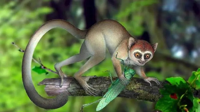 Likely our oldest primate ancestor