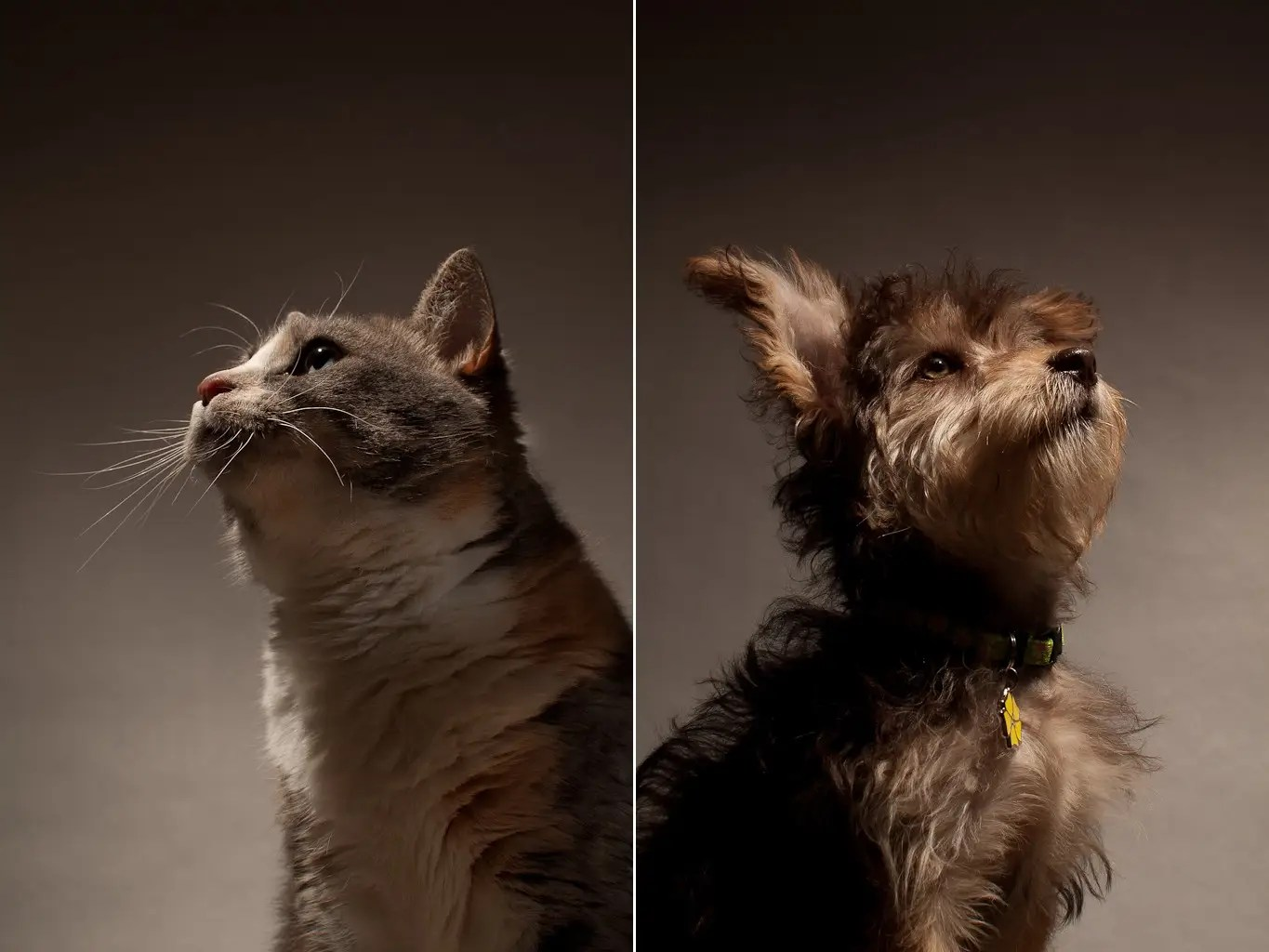 Dogs and cats don't see in shades of grey.  They can see in blue and green. Dogs have a wider field of vision than humans but cannot see as far in front of them as we can.