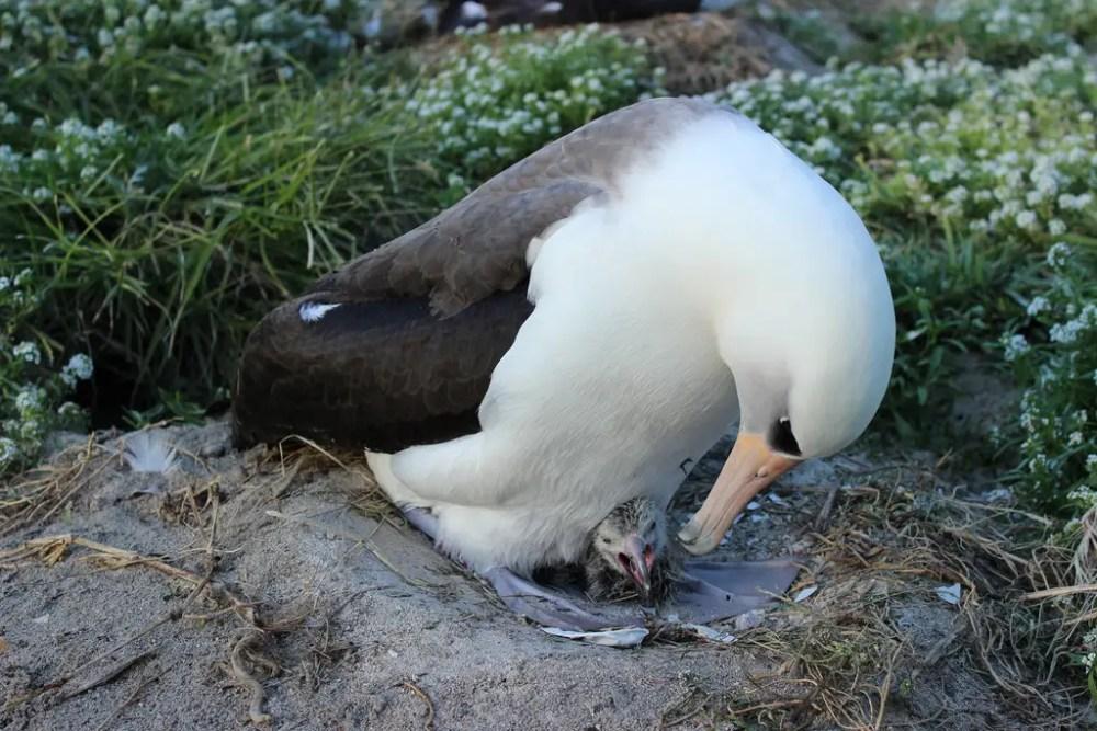 World's oldest bird has baby (1/6)