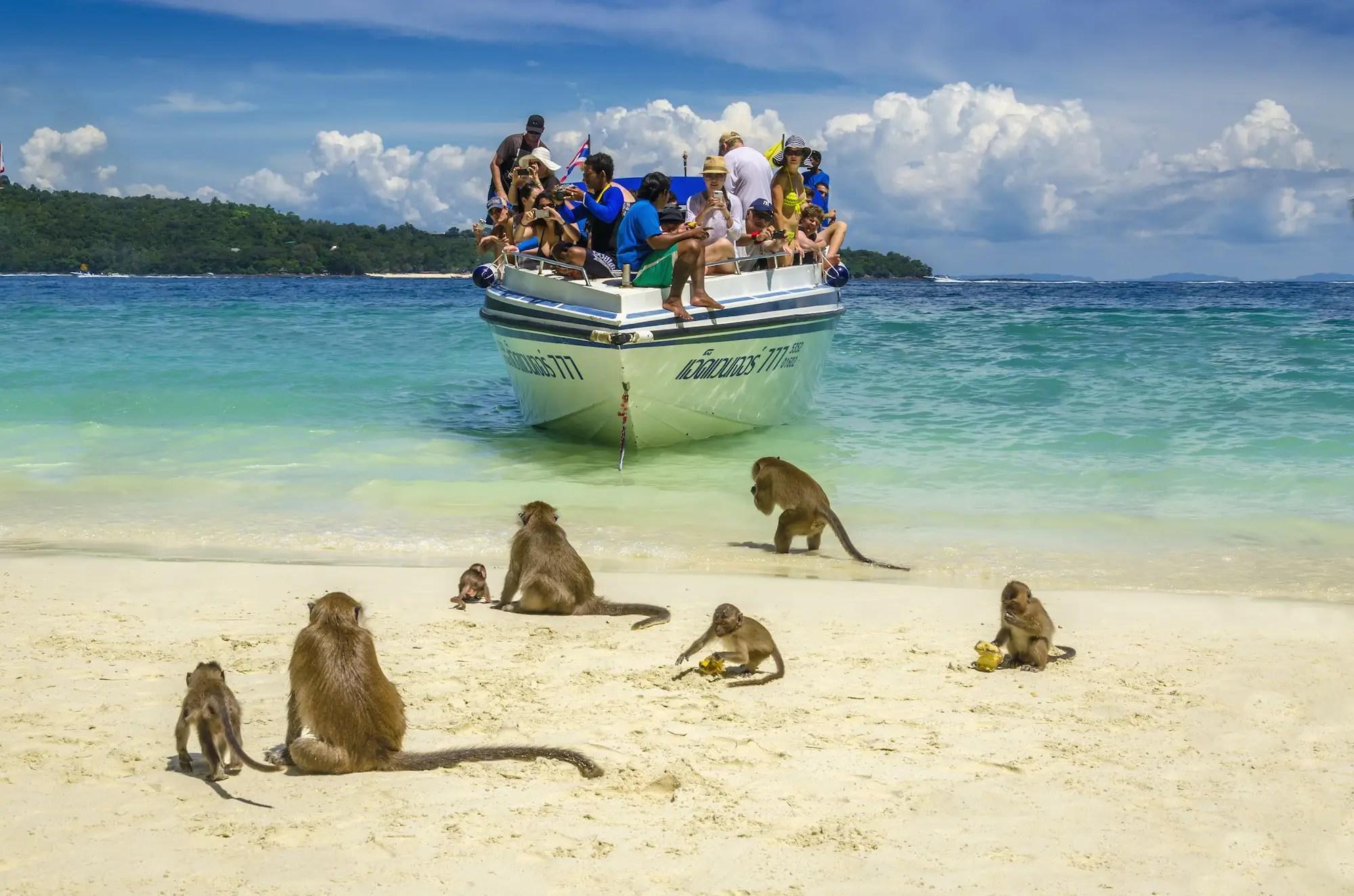 Monkey Beach, Koh Phi Phi, Thailand.