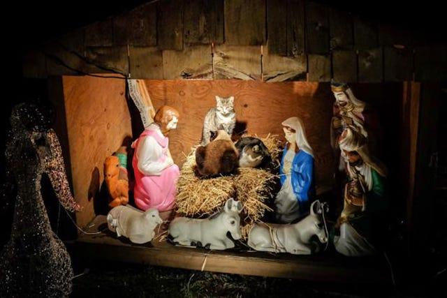 Cat Nativity Scene Annette Sue Amendola Brooklyn