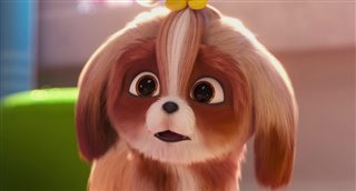 The Secret Life Of Pets 2 The Daisy Trailer Movie Trailers