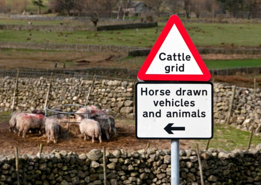 Cattle Grid Sign and Sheep in Lake District
