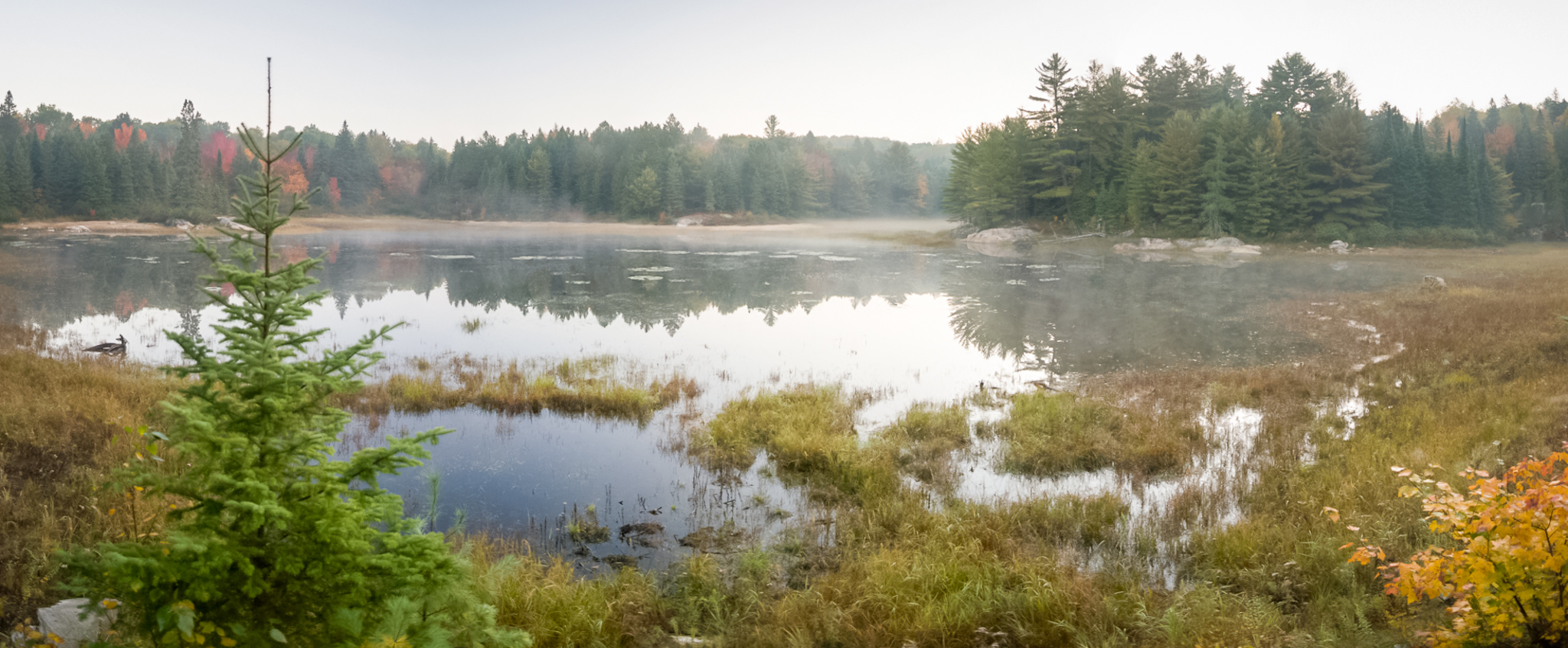 Early Morning Pond (1/100s, f/3.5, ISO800 - 9 shot panorama)