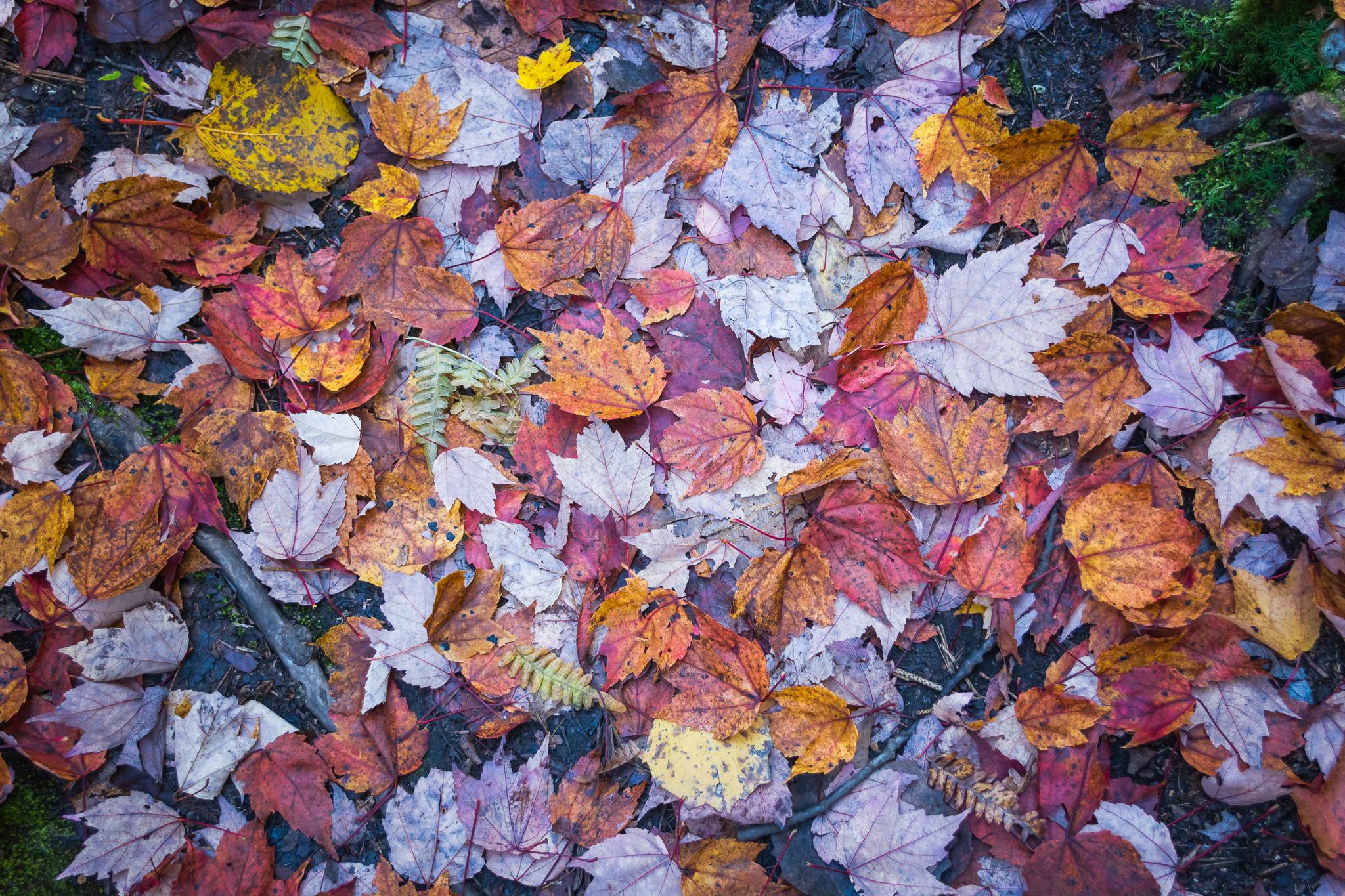 Orange Leaves (1/50, f/4.8, ISO800)