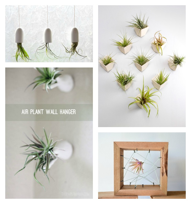 Wall Plant Holders Indoor