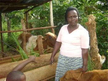 Wambani