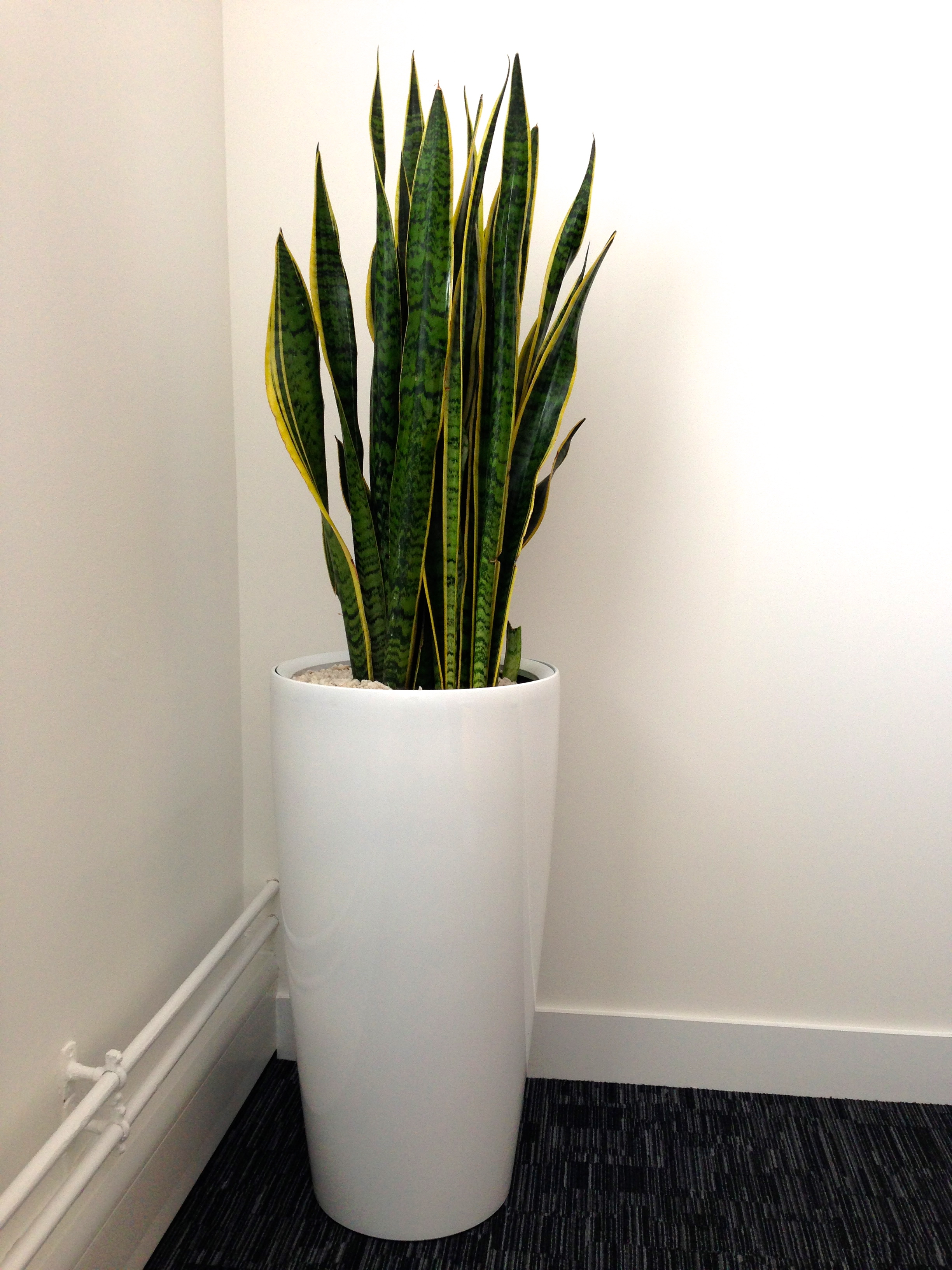 Plants Greenplants Co Uk