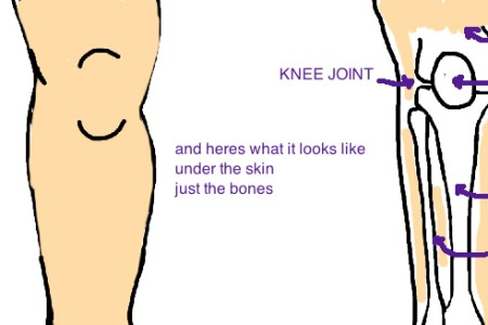 Interior anatomy of left knee full hd maps locations another causes of knee pain knee arthroscopic surgery procedure recovery blood removal step a shows the anatomy of the knee from the front with the leg bent ccuart Choice Image