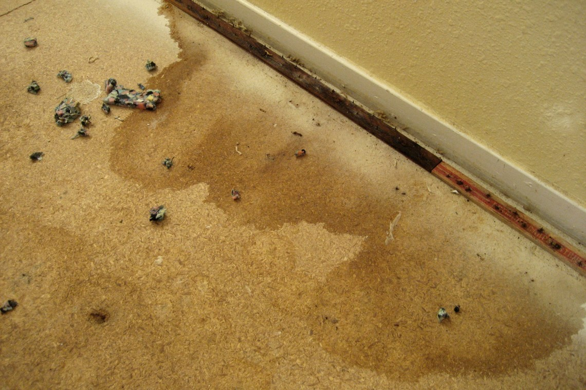 Image Result For How To Get Rid Of Dog Smell In Carpet