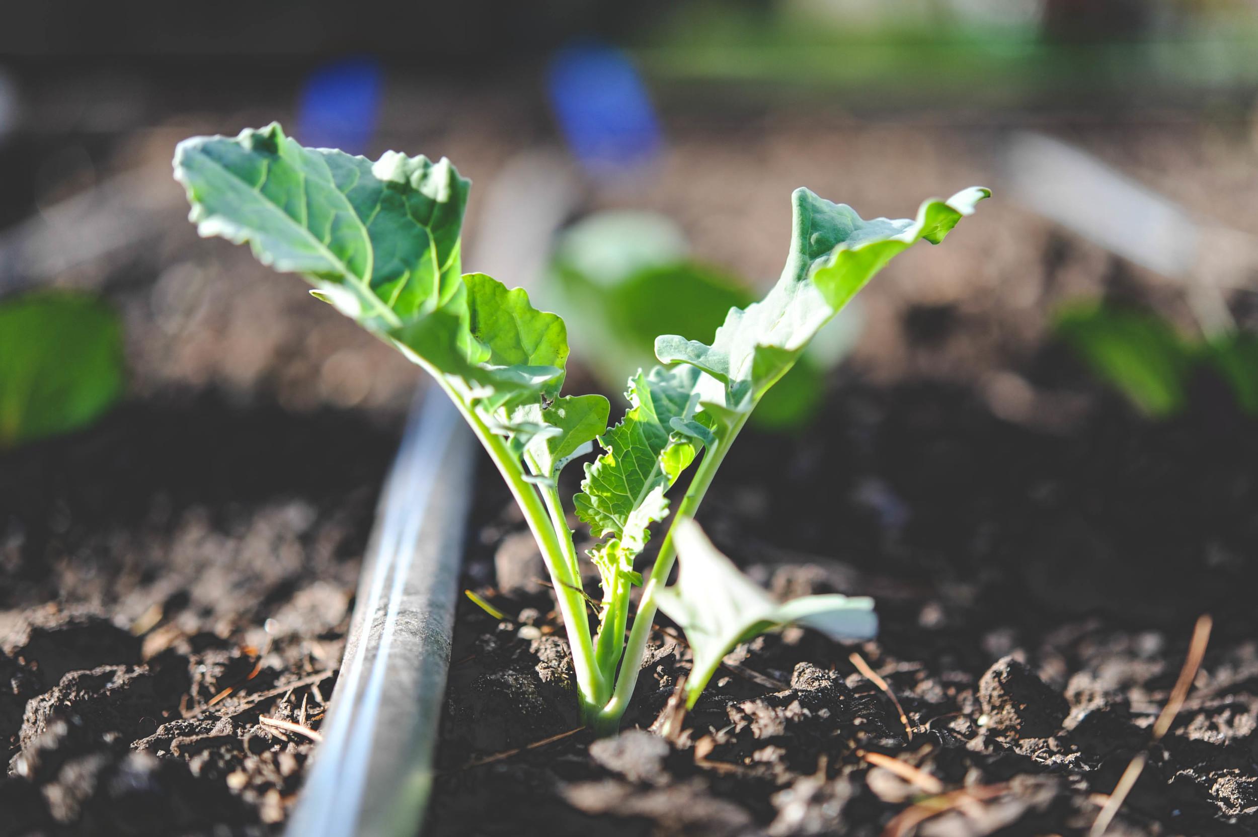 Raised Vegetable Garden Watering System