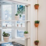 How To Care For Indoor Plants Succulents Ferns And Mosses The Pioneer Collective