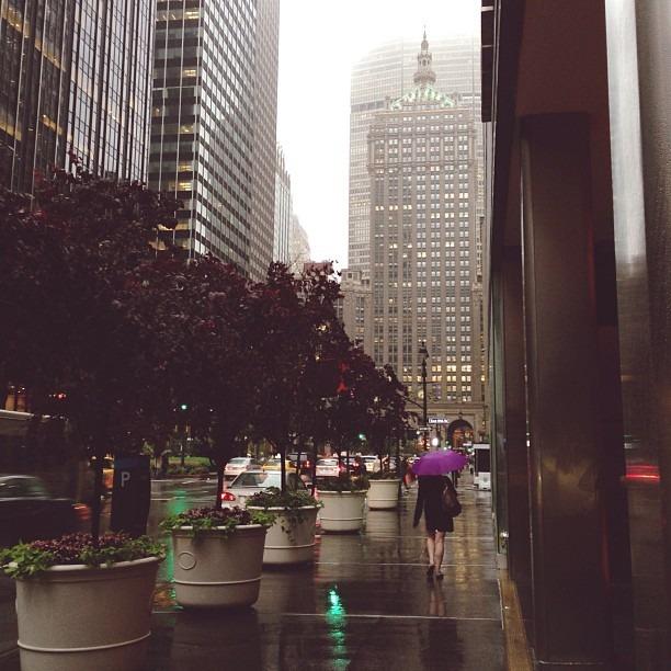 Purple Central (at Park Avenue)