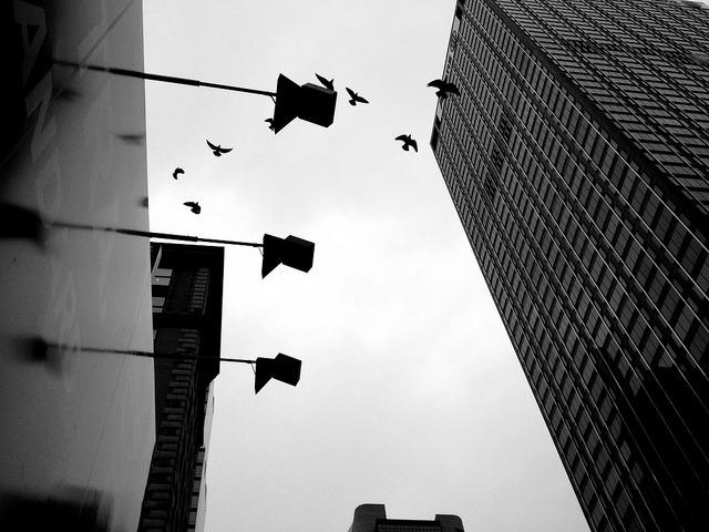 Birds and Lightposts on Flickr.