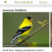 Identified the bird in the sunflower using Cornell University's Merlin app for iOS.