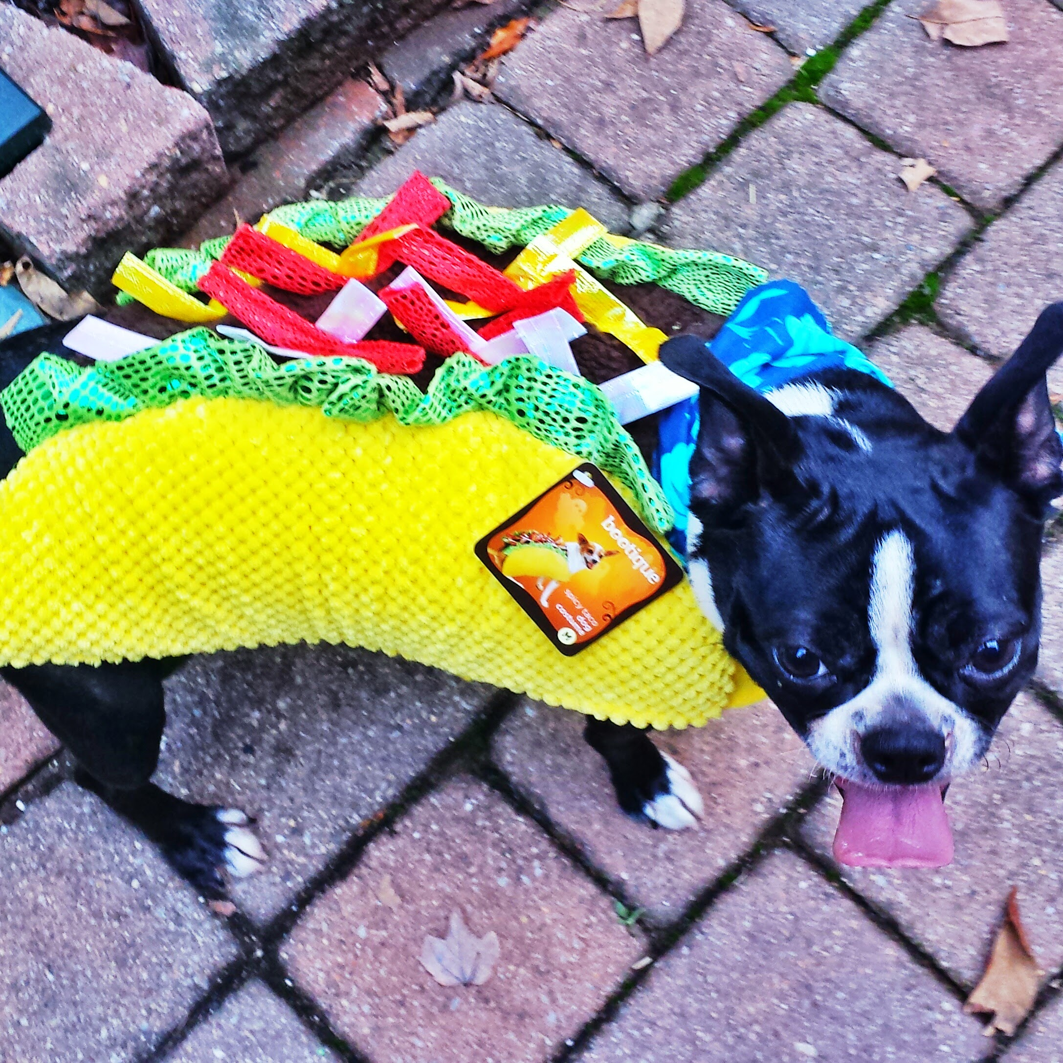 We call her Taco Belle!!