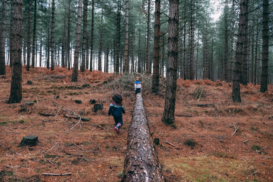 climbing on fallen trees in the New Forest
