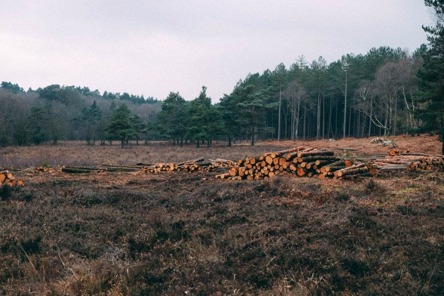 low timber stacks,Nr Matley Wood, New Forest