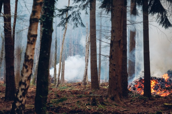 Forestry Commission Tree Extraction & Controlled Burning in the New Forest