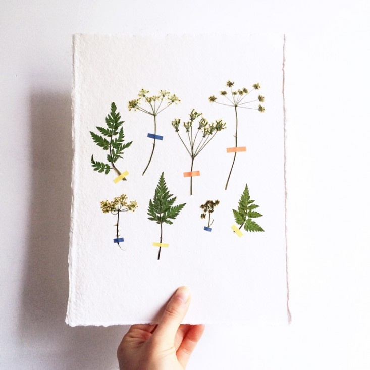 Idea to Try   Pressed Flowers     Rose   Ivy ROSE   IVY Journal Idea Pressed Flowers