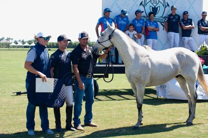 APHA Best Registered Horse of the game, Echarpe.JPG