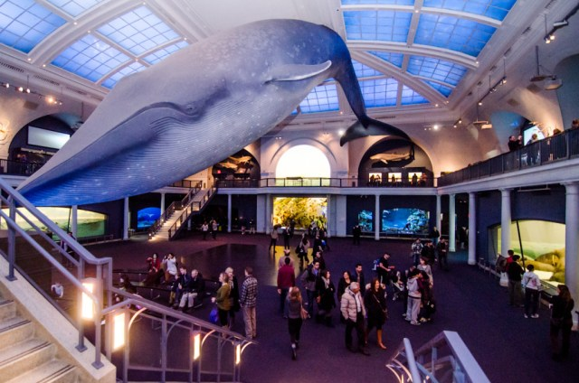 American Museum of Natural History Photo Credit: museumhack.com