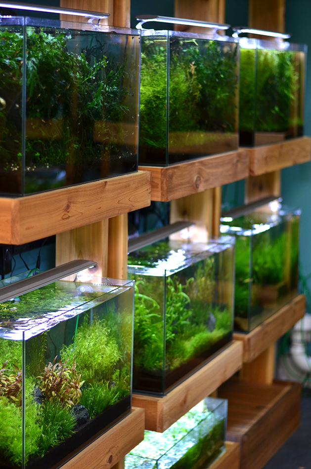 Aquarium Plants Sale Near Me