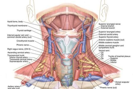 interior nose anatomy photos » Full HD MAPS Locations - Another ...