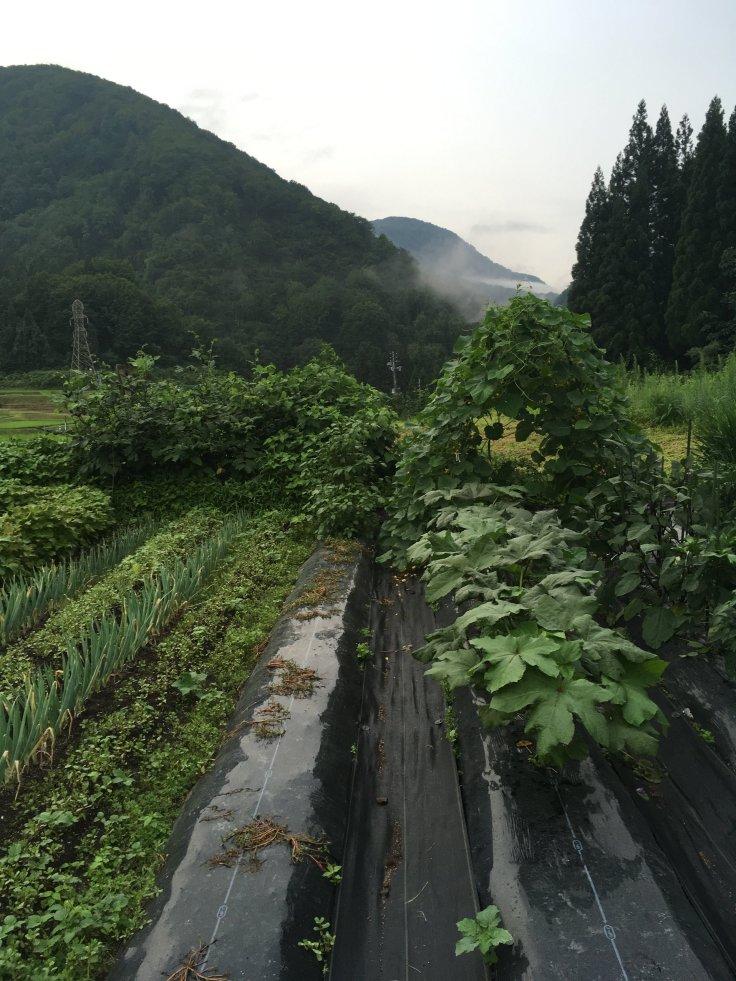 S. kitchen garden