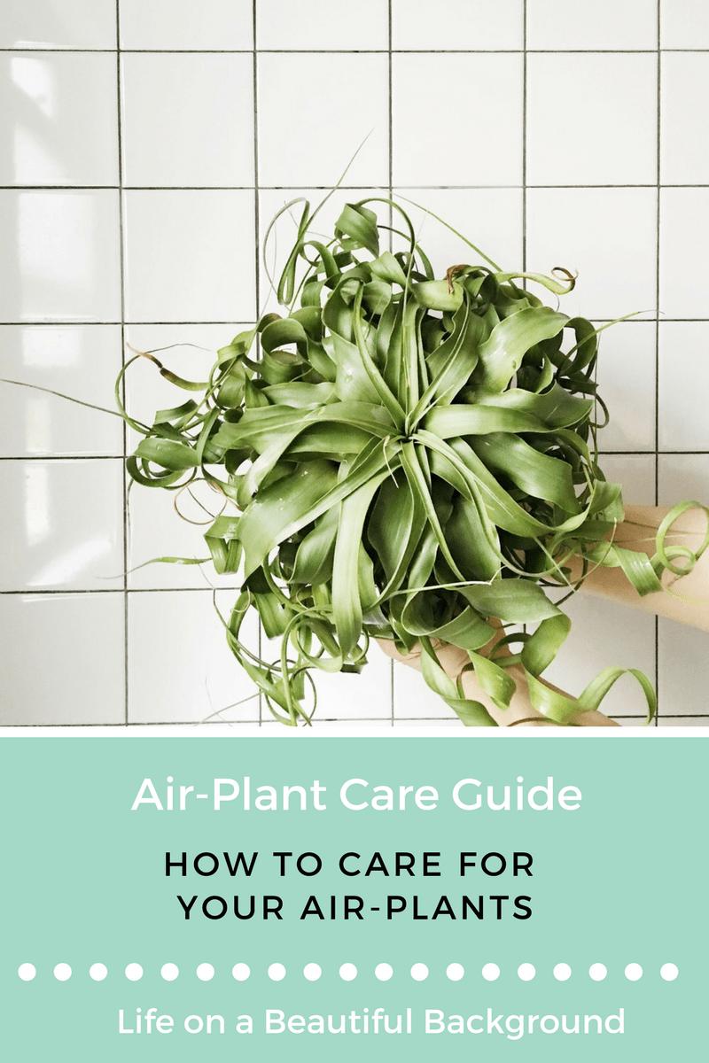 AIR PLANT CARE GUIDE Retro Den