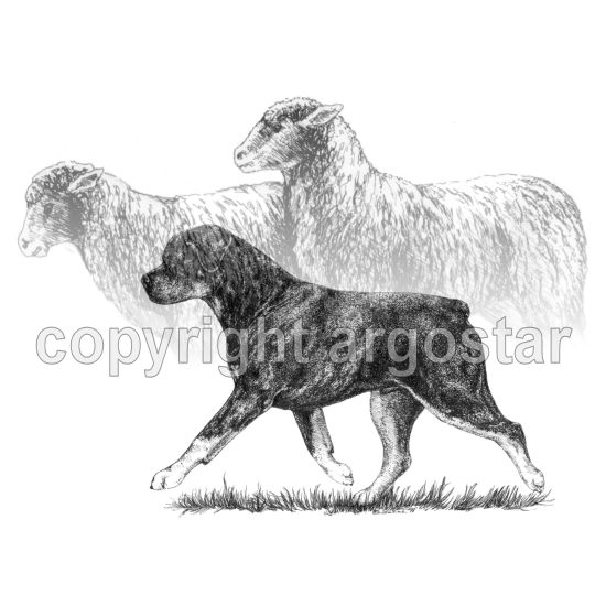 Note Cards Rottweiler Sheep Herding Abstract Argostar