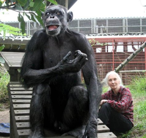 goodall and chimp