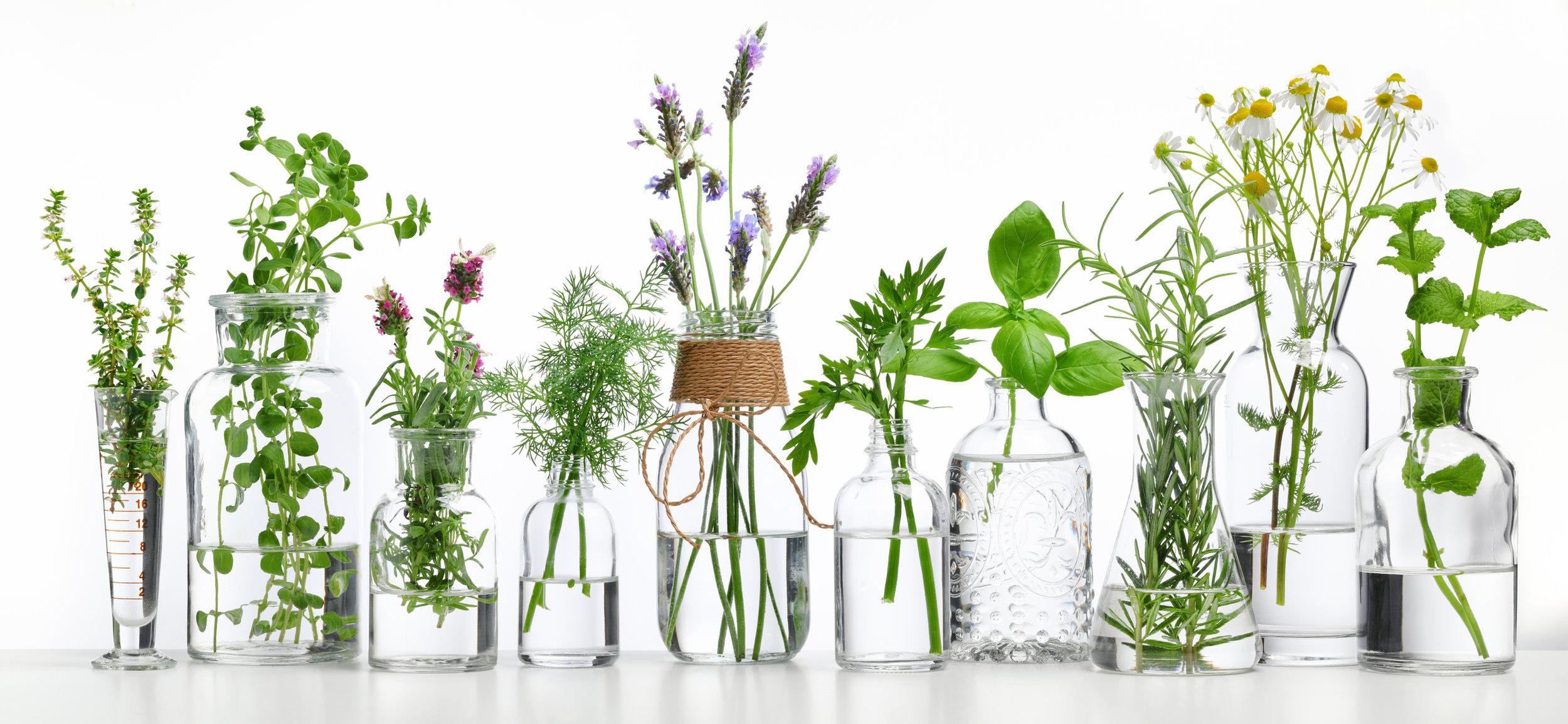 Growing Herbs Indoors B B Barns Garden Center Landscape Services