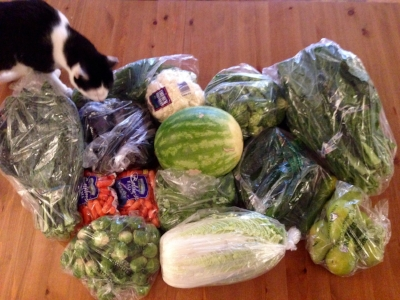 Who says eating healthily is expensive? All this for $27.Lacinato kale x 2; eggplant x 2, dill x 2; cauliflower, broccoli florets, collard greens x 2; baby carrots x 2; watermelon, cucumbers x 12; Brussels sprouts, cilantro x 3; Napa cabbage, organic pears x 6. (Diego is inspecting my produce haul.)