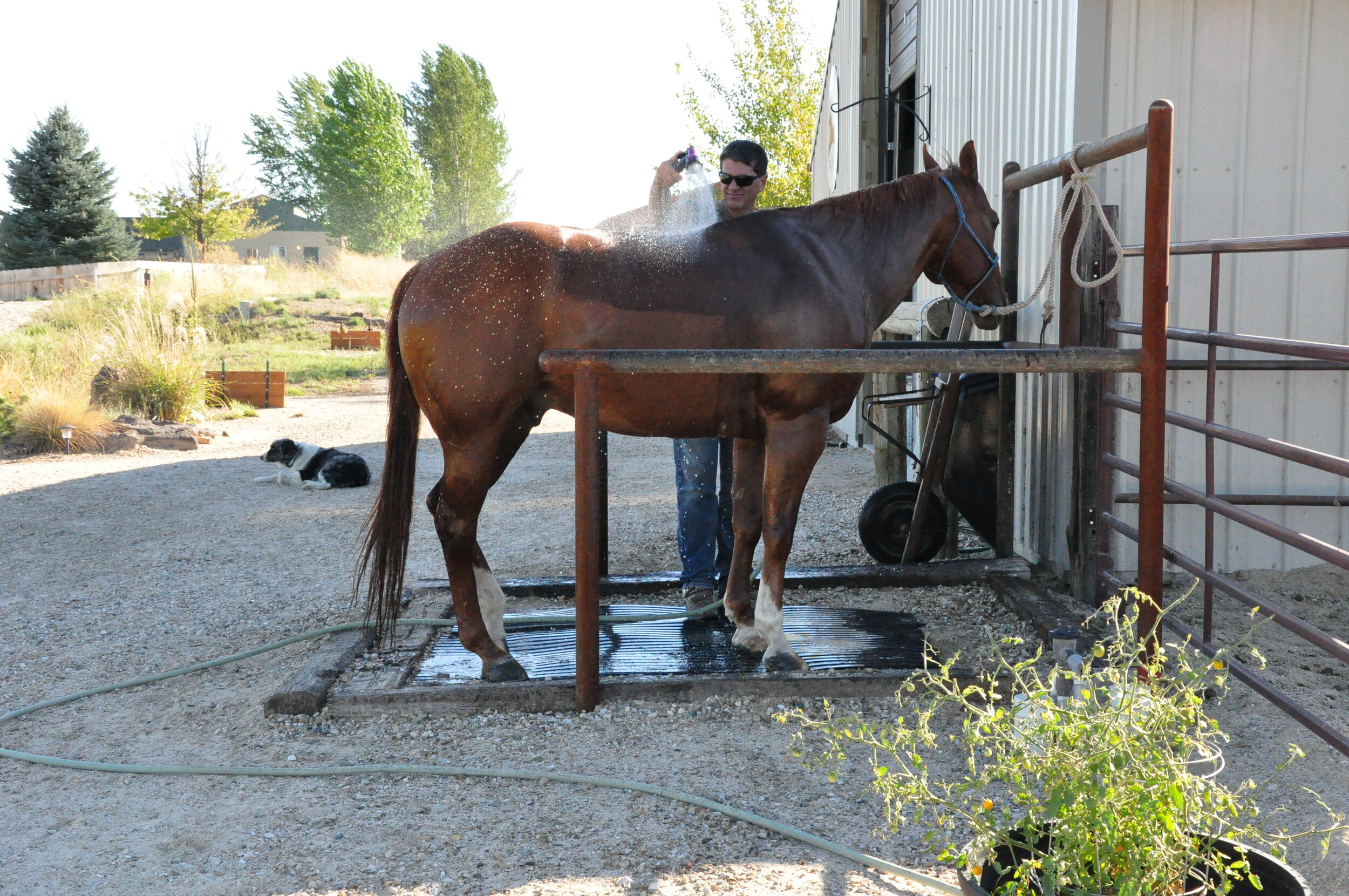horses for clean water