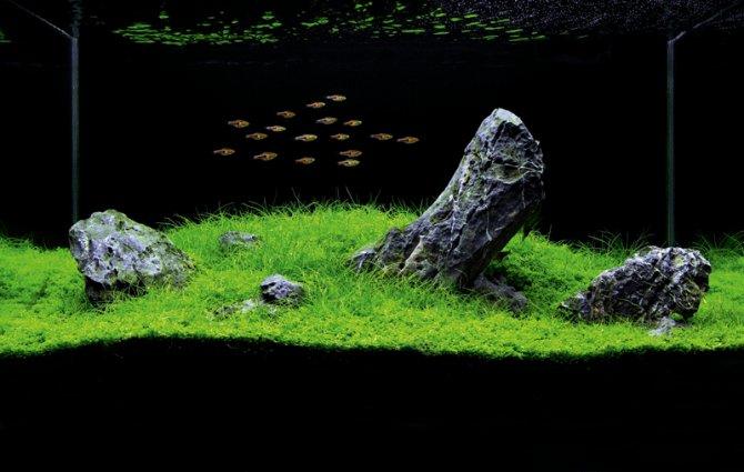 Small Aquatic Plants