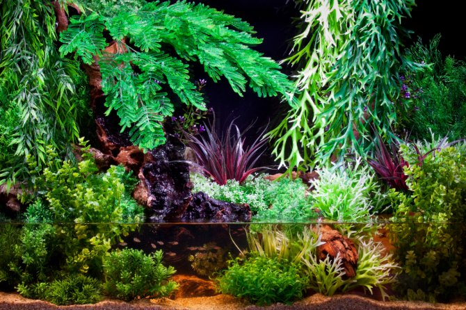 Aquarium Plants Sale