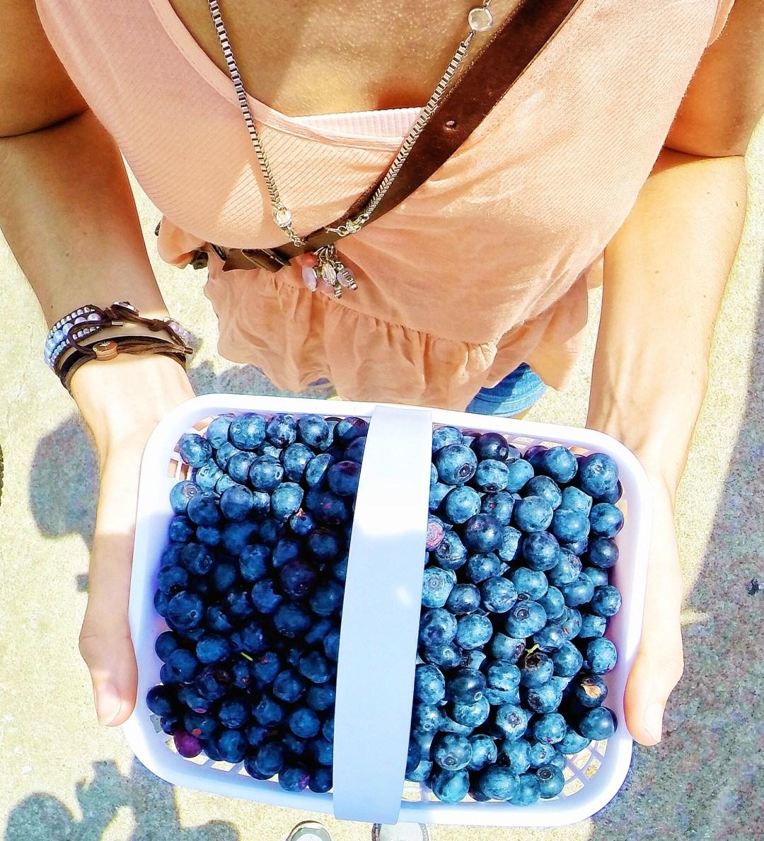fresh blueberries local
