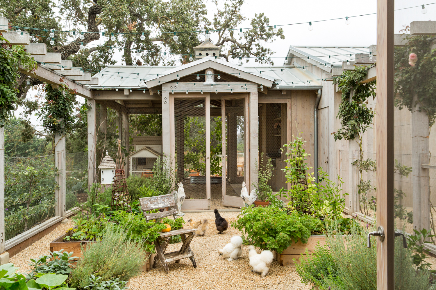 Giannetti_PatinaFarm_ChickenCoop-0172 copy.jpg