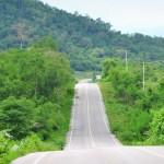 Forest road. Landscape for background
