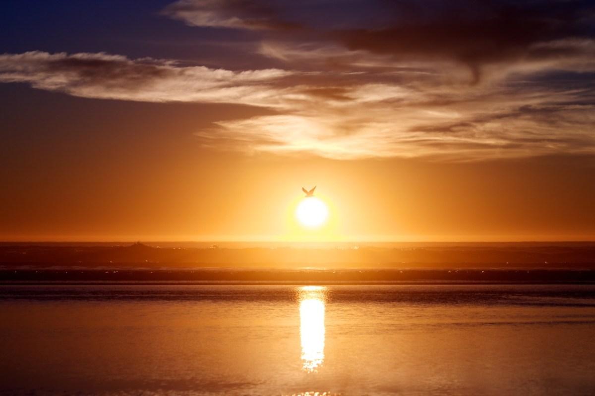 Sunbird - Pismo Beach, CA