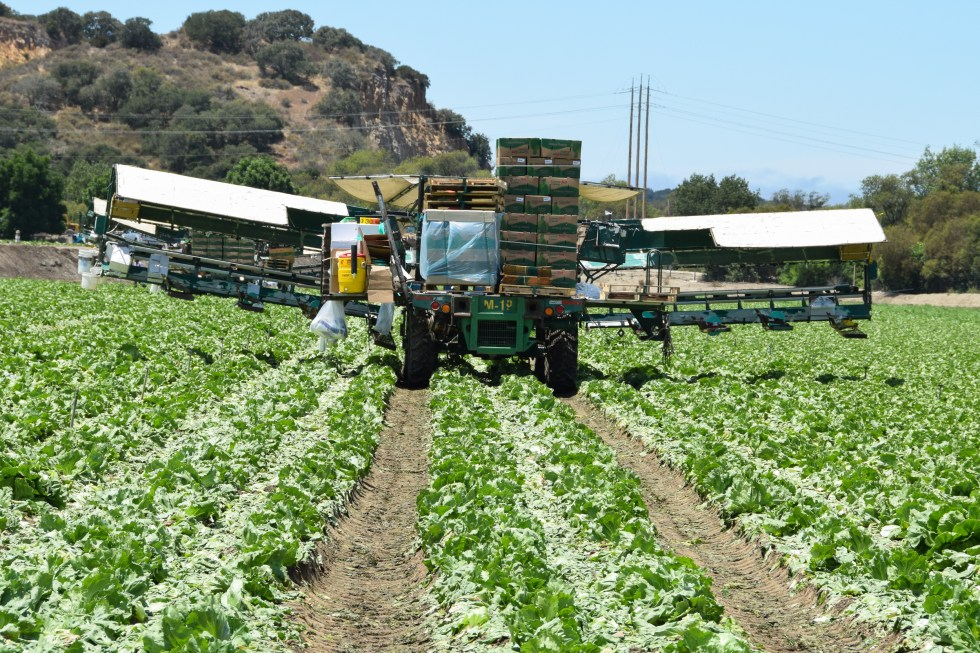 Lettuce processors hit the road for the winter