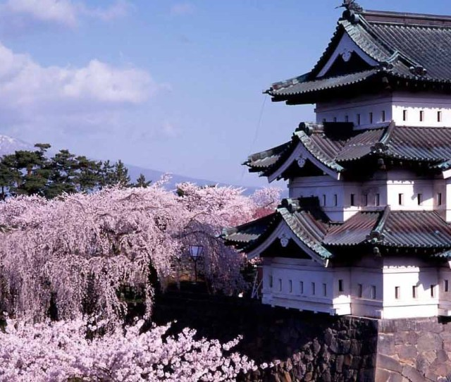 Hirosaki Castle In Japan Surrounded By Cherry Blossom Tree