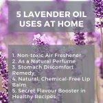 7 Healing Benefits Of Lavender Essential Oil Alice Nicholls