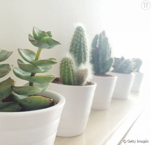 5 bonnes raisons de vous offrir une jolie plante verte pour votre bureau