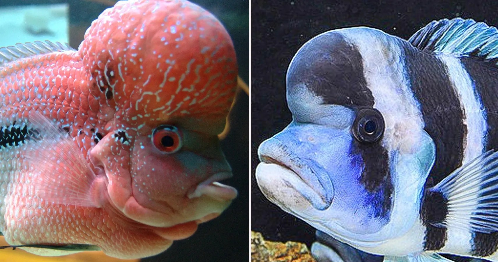 10 Most Expensive Household Fish Ranked