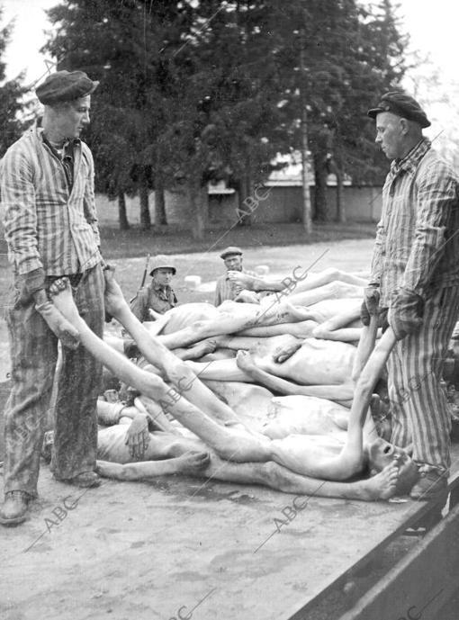 Unos prisioneros trasladan cadáveres de muertos en el campo de concentración de Dachau en abril de 1945