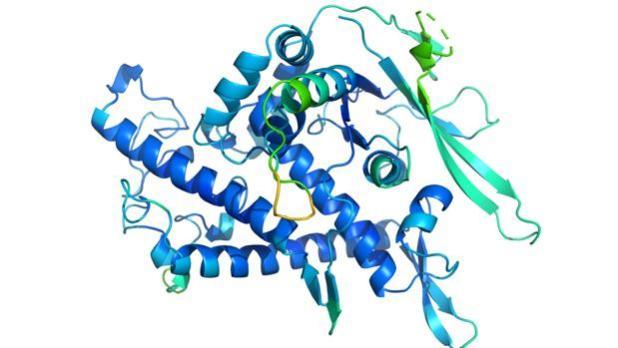Representación de la estructura de una de las proteínas analizadas. Conocer su disposición tridimensionales fundamental para entender su función o cómo interferir con ella