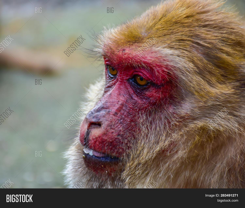 Funny Monkeys Monkey Image Photo Free Trial Bigstock