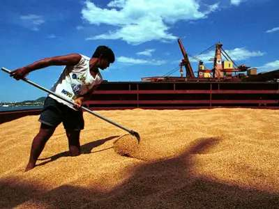 Soybean Prices Remain Elevated Due To Supply Disruptions In South America